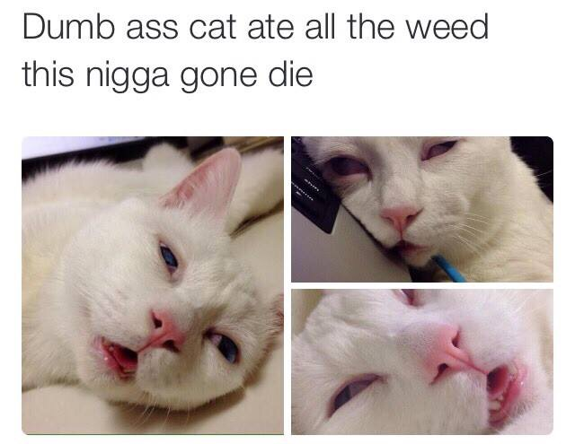 cat smoked weed