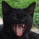 It was just cats, everywhere: Kilgoar