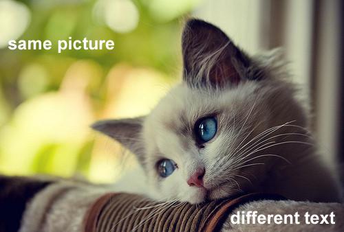 kitty-same